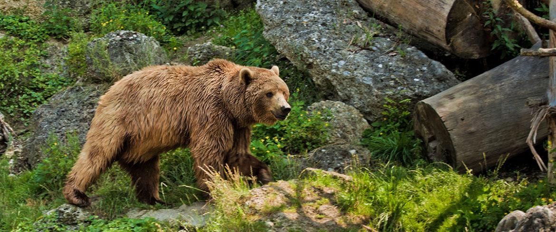 Ausflugsziel Zoos & Wildparks